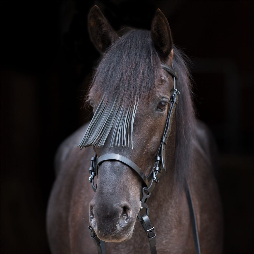Zaum Vaquero Schwarz Pferd Picadera