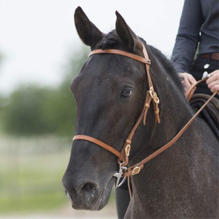 Zaum-Corelli-Natur-Gold-Pferd-Picadera